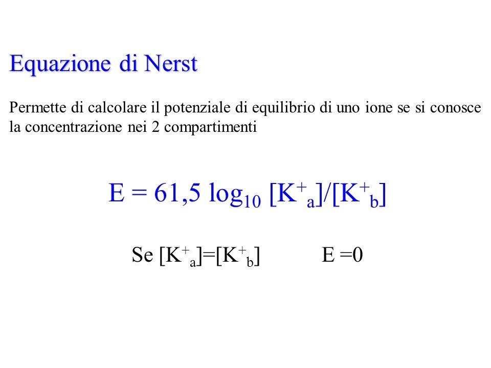 E = 61,5 log10 [K+a]/[K+b] Equazione di Nerst Se [K+a]=[K+b] E =0